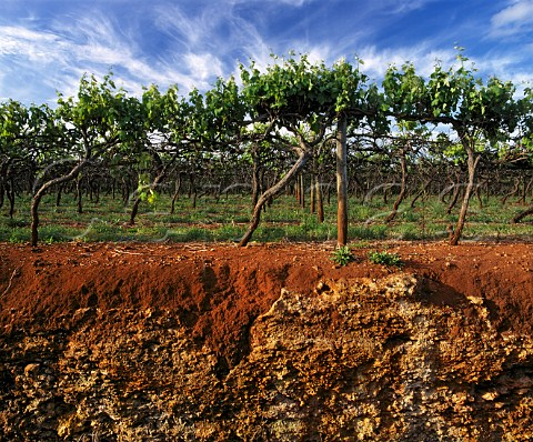 vineyard_soil management