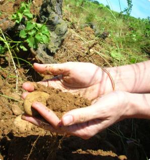 soil_terroir