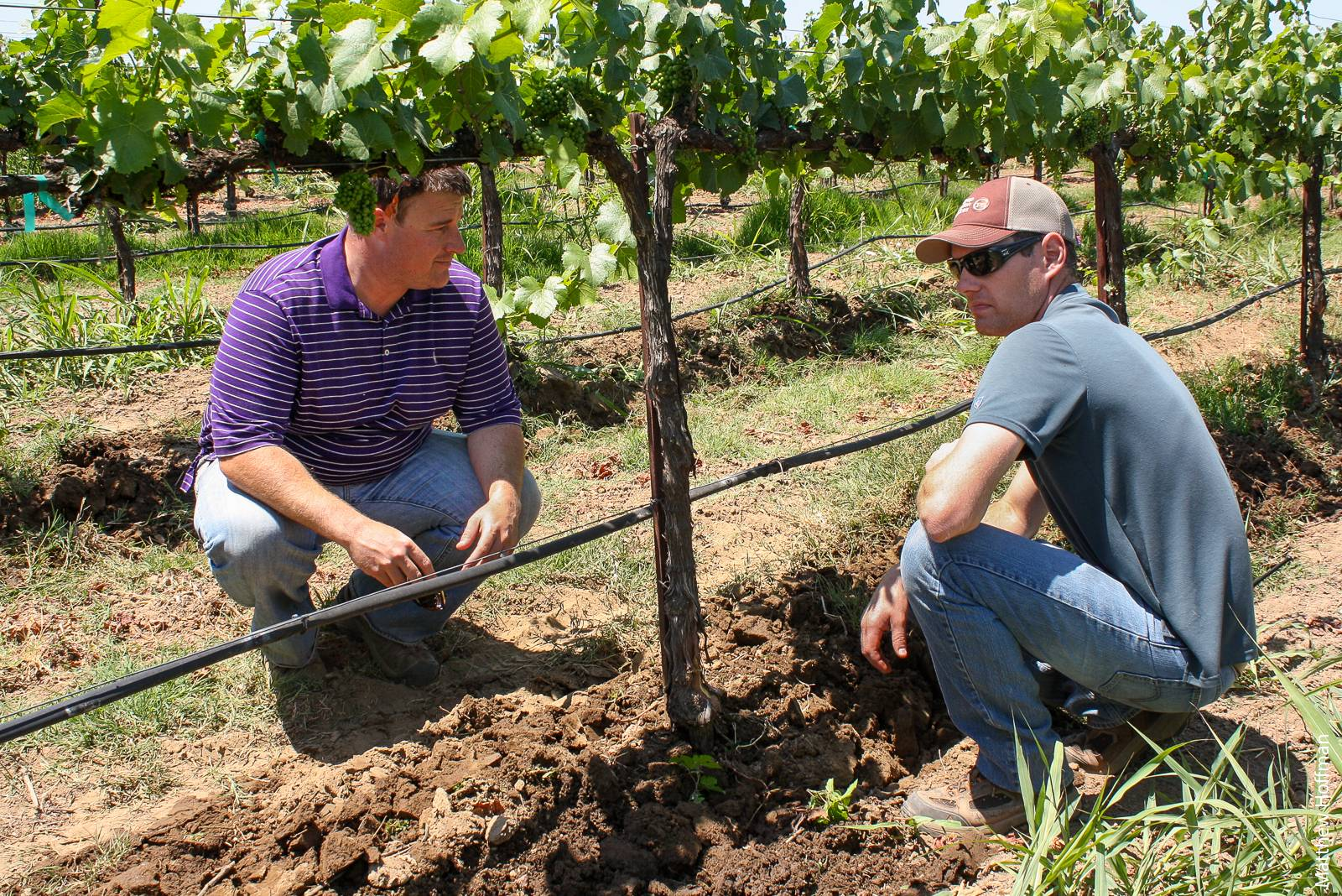 Lodi wine grape growers Craig Ledbetter (left) and Aaron Lange (right) share thoughts after observing a trial pass of a prototype multirow in-row cultivator, engaging in both experiential and social learning simultaneously. In a survey of growers, field research and trials (experiential) and interpersonal relationships with other growers (social) were ranked as highly useful sources for learning about vineyard management.