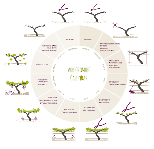 Vineyard management calendar based on the annual grapevine growth cycle