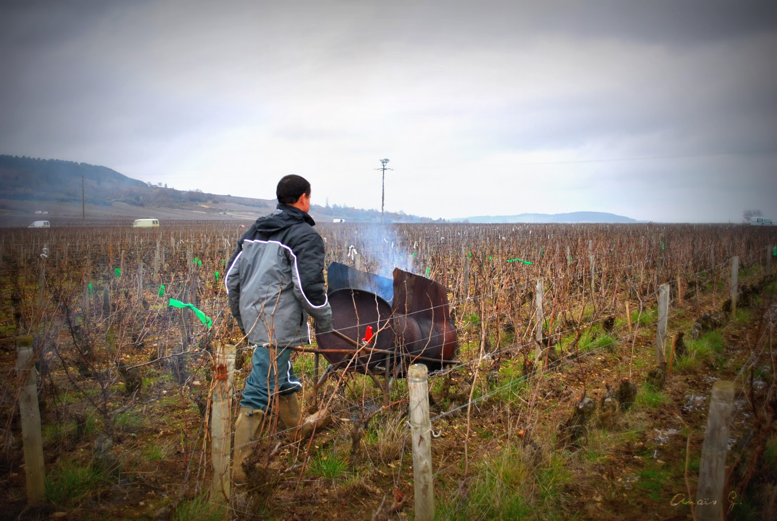 Burning vine prunings already during the dormant pruning activity