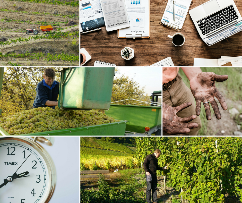 Time management and work organization in vineyard