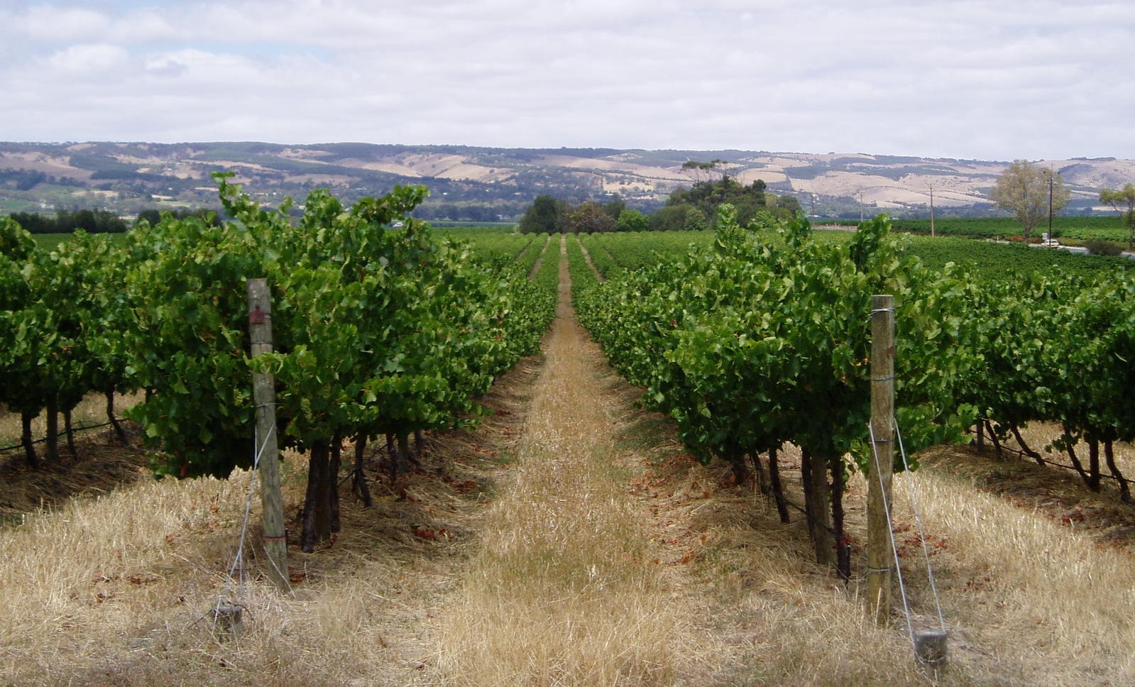 Numbers-driven vineyard management