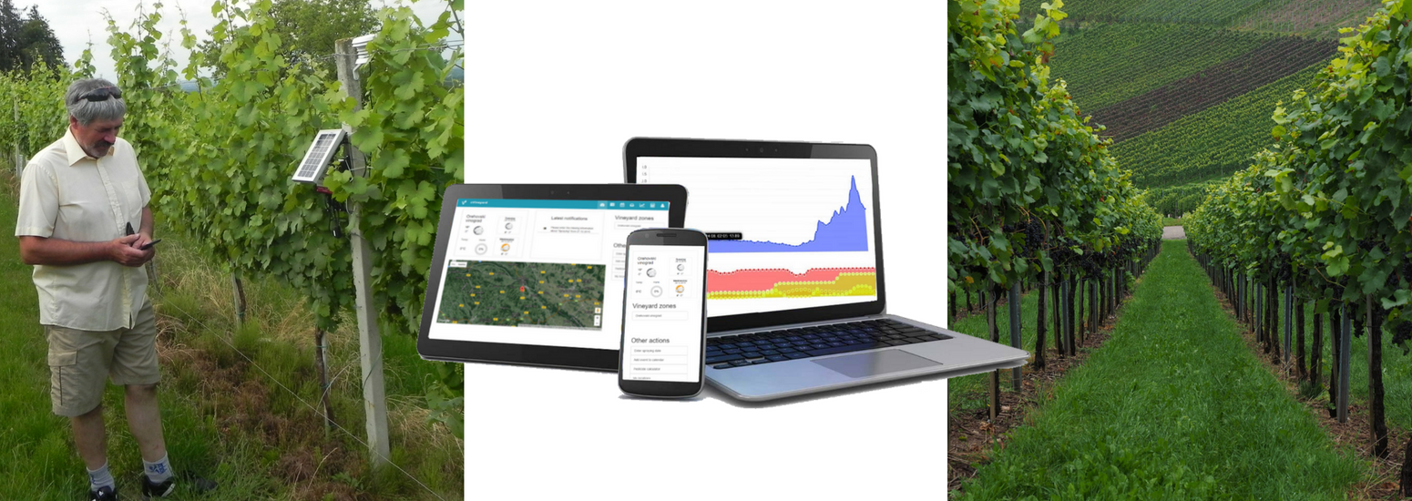 Decision support system - integrated pest management in the vineyard