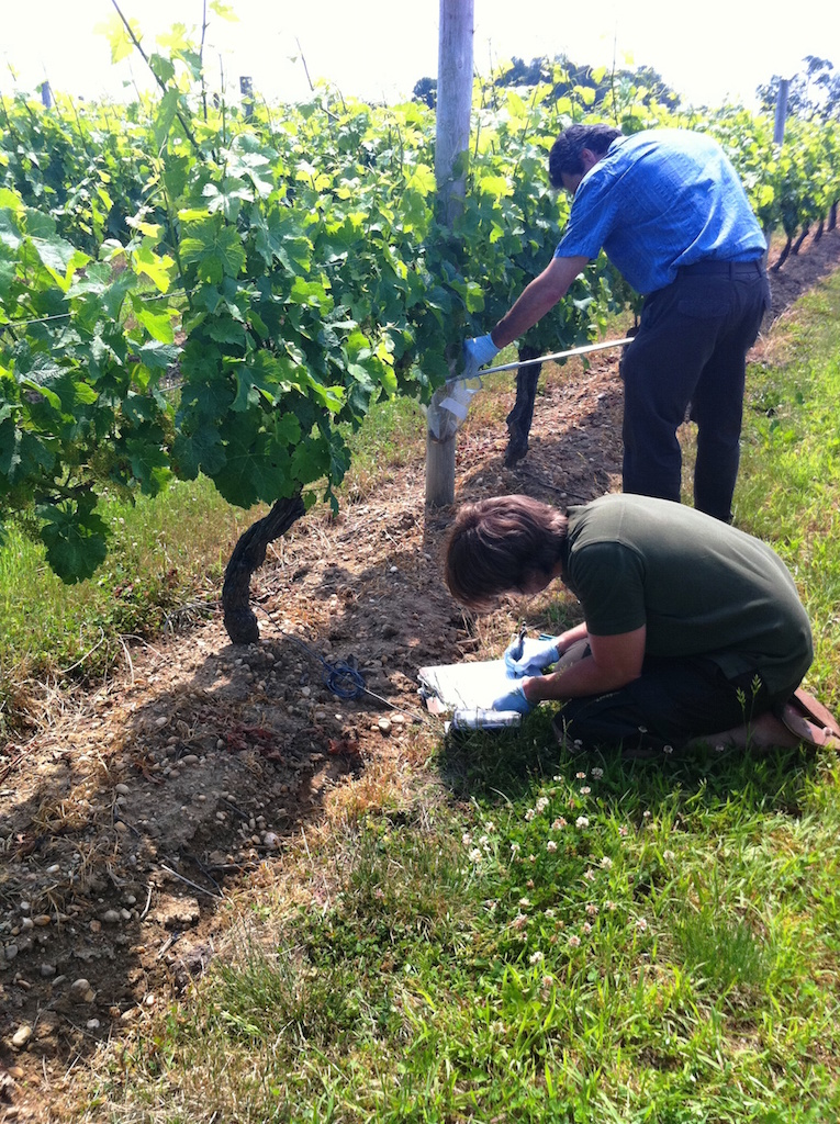 collecting-soil-samples-in-vineyard
