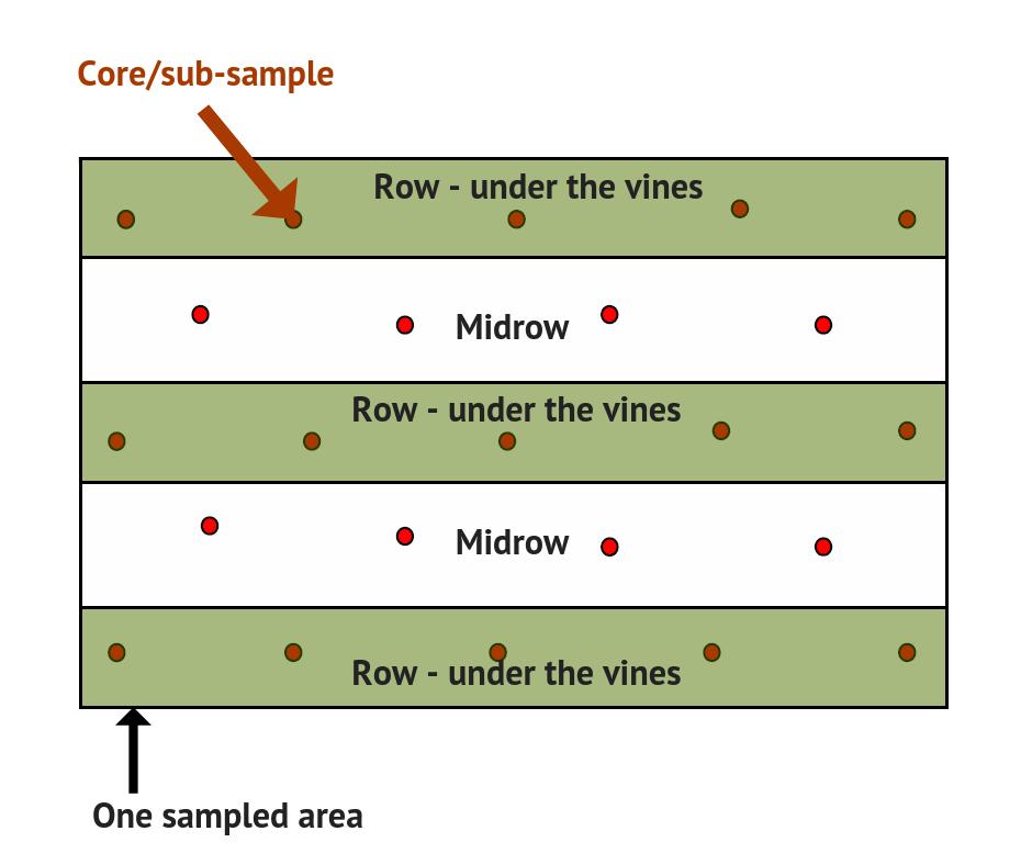Vineyard soil sampling distribution