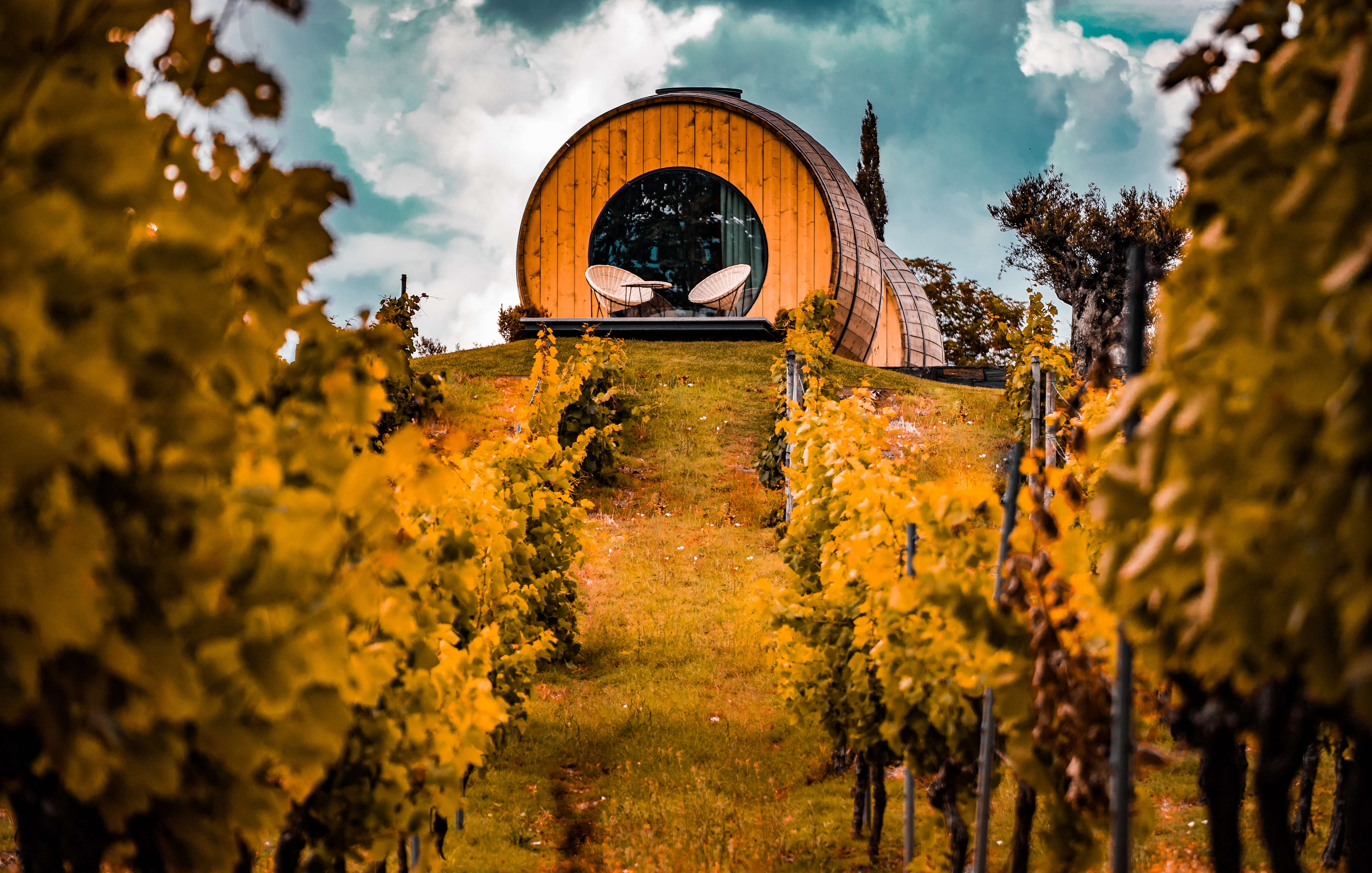 wine-tourism