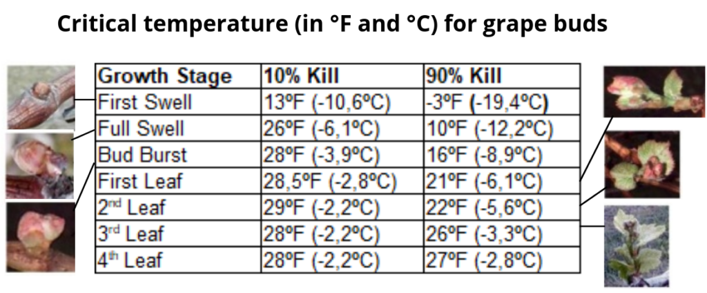 Critical temperatures values for grapevine