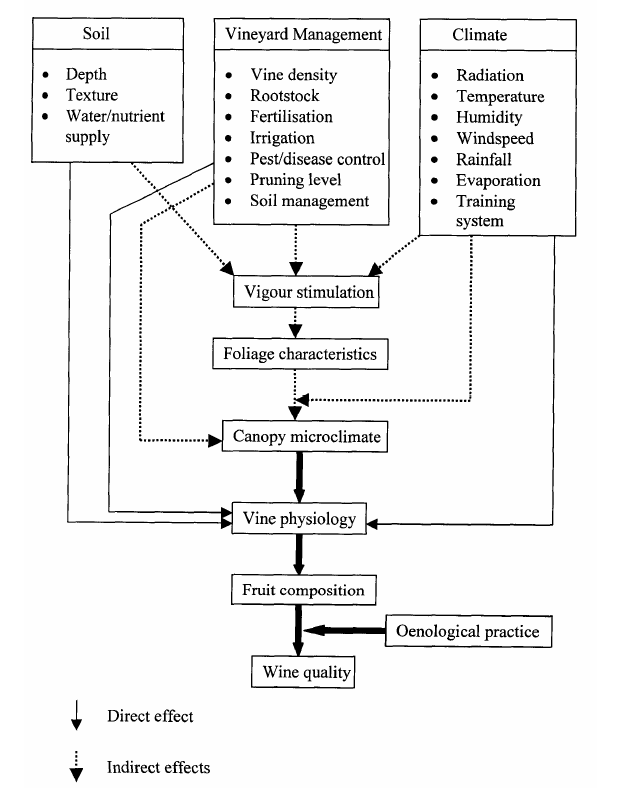 Direct and indirect effects of soil, climate, and vineyard management to fruit composition