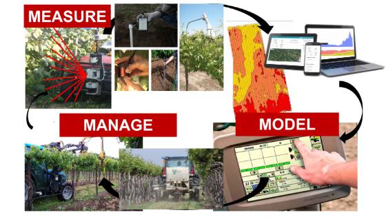Precision viticulture technologies - help measure, model and manage vines.