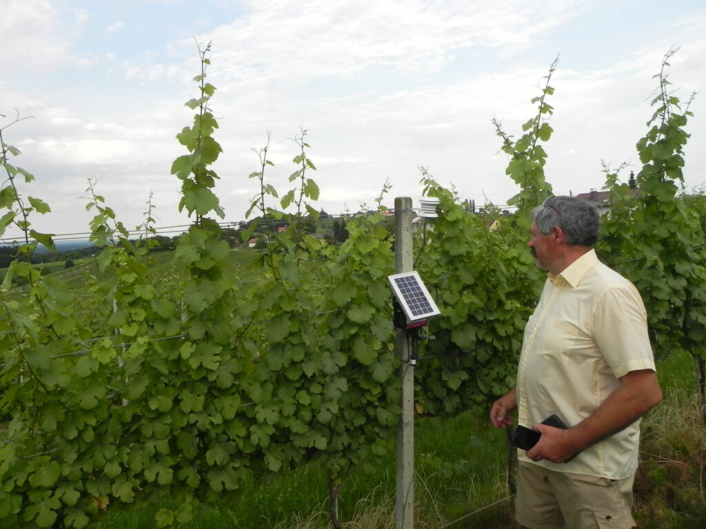 The photo of a wireless sensor node in the vineyard that monitors vines micro-climate.