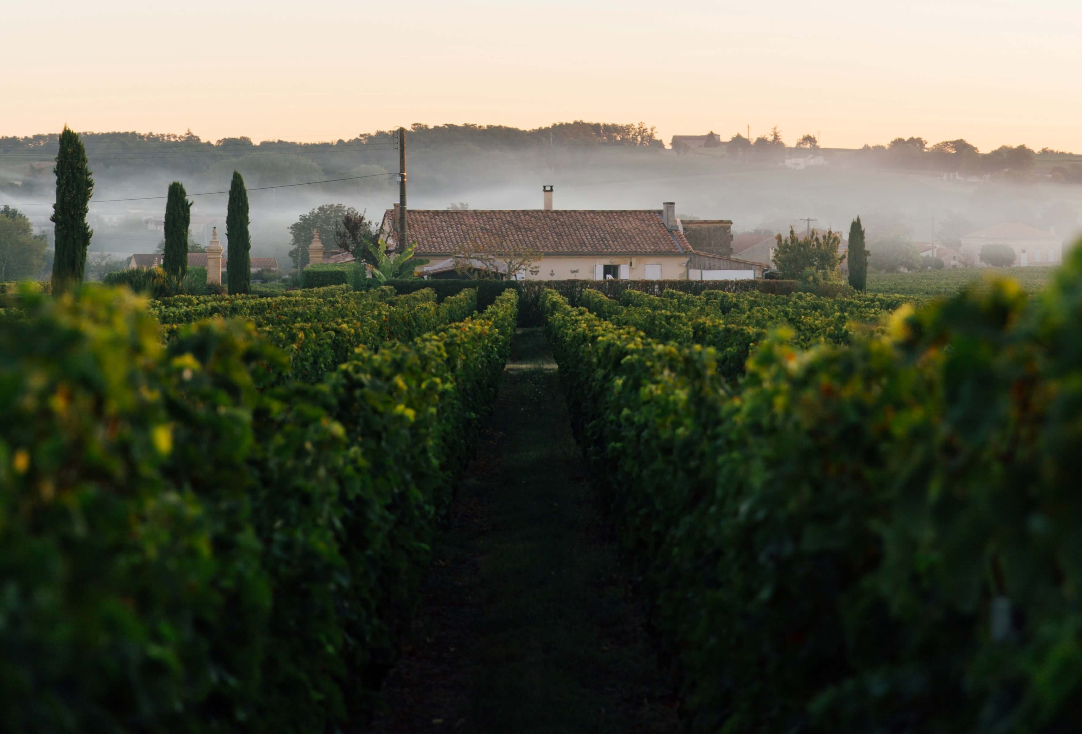 small family-owned vineyard farms business