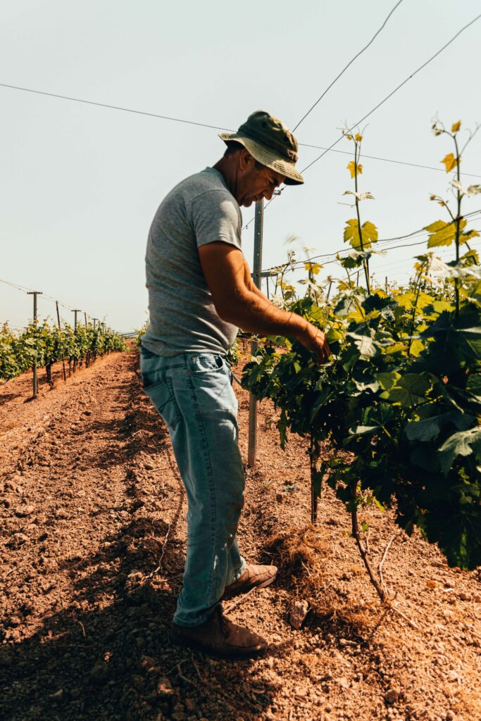 small-vineyard-owner