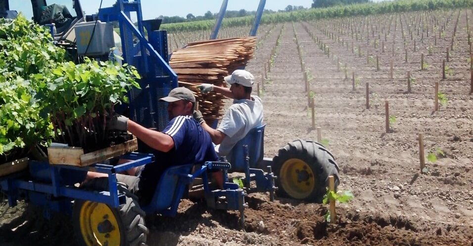 planting vineyard with gps accuracy