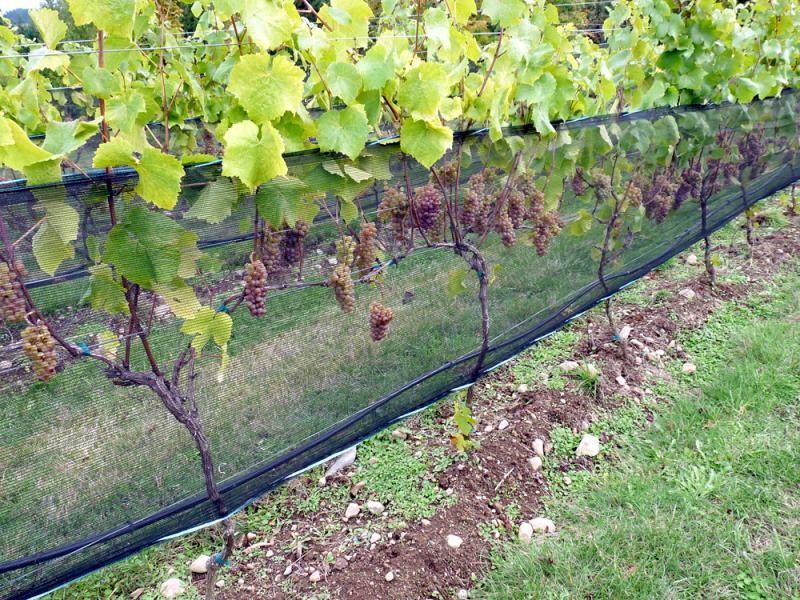 vineyard_netting