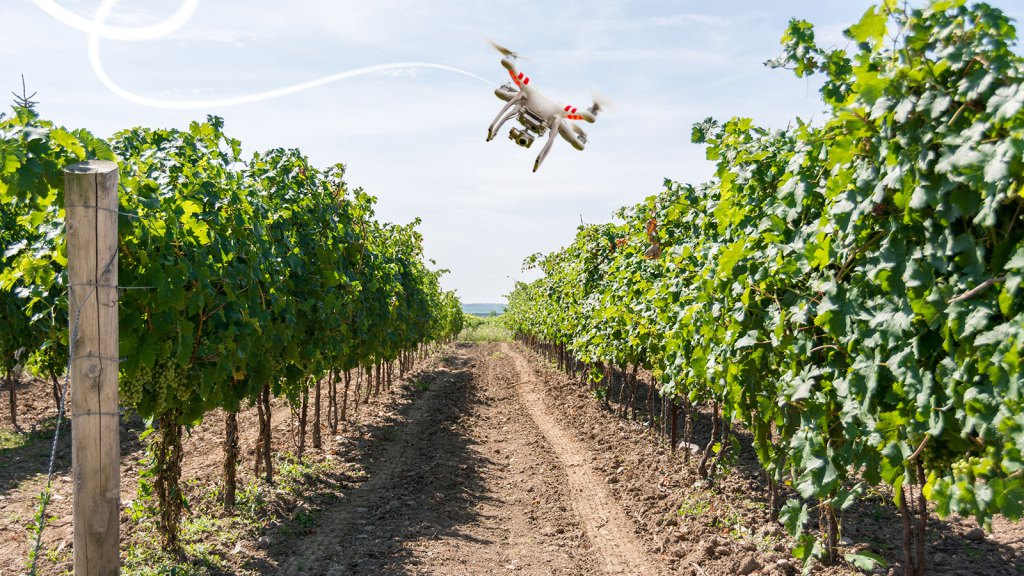 drone-and-vineyard1