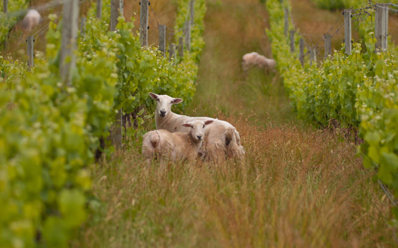 There is an increased demand for natural, organic and biodynamic wines.