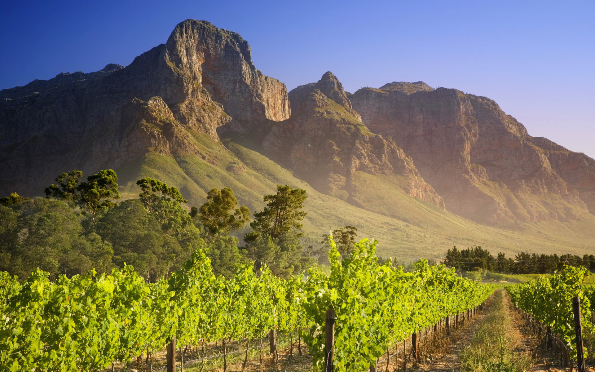 The world wine industry is shifting from old to new world