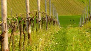 Why March and April are the best months (on Northen hemisphere) to set up the weather stations in your vineyard?