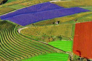 Precision viticulture