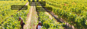 Worker Relations and Motivation in the vineyard