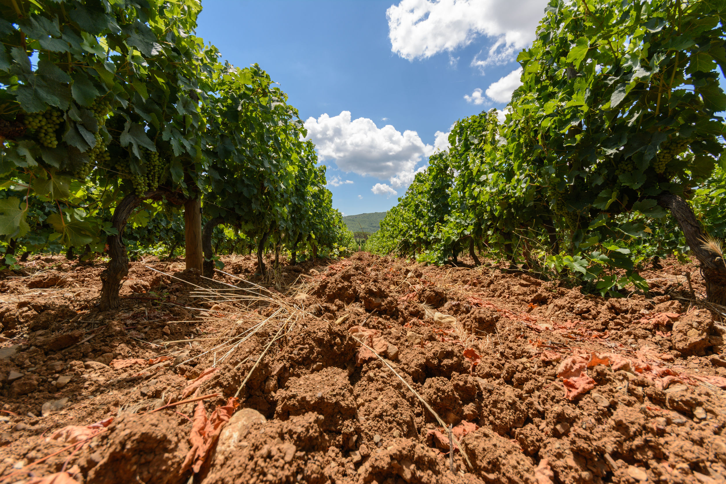 Vineyards Soil sampling guidelines