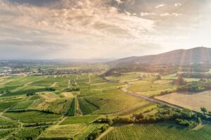 vineyard management based on climate and weather