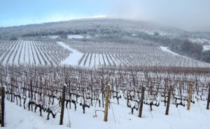grapevine winter chilling requirements