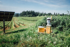Importance of bees in Vineyards