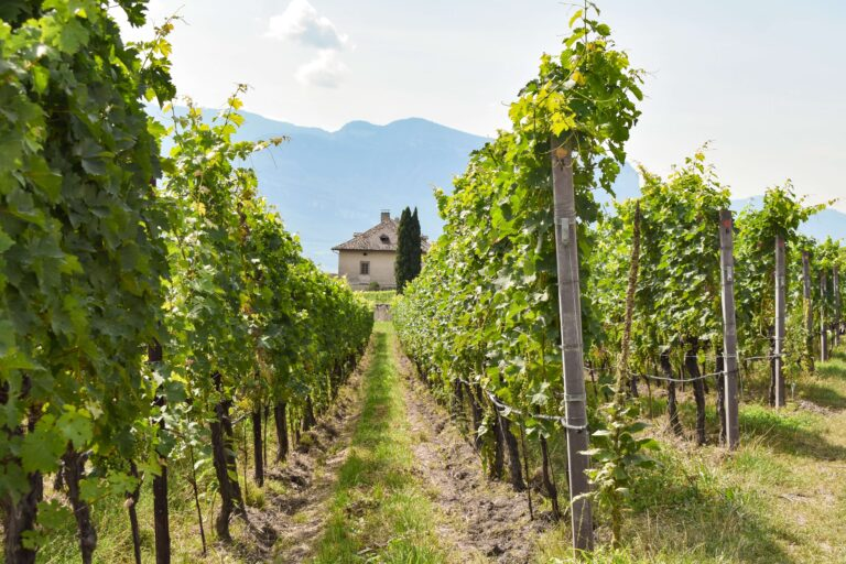 sustainable-vineyard-pest-control