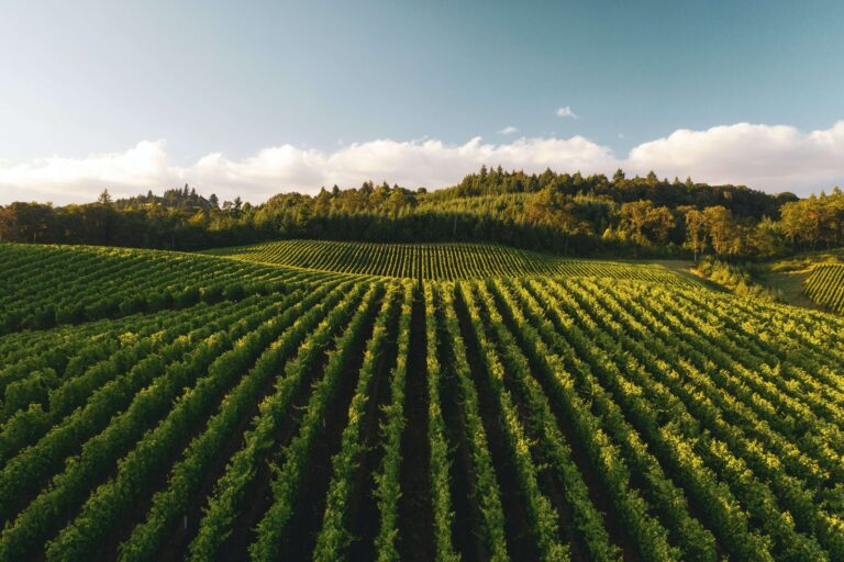 Use of GPS for improved and more sustainable vineyard management