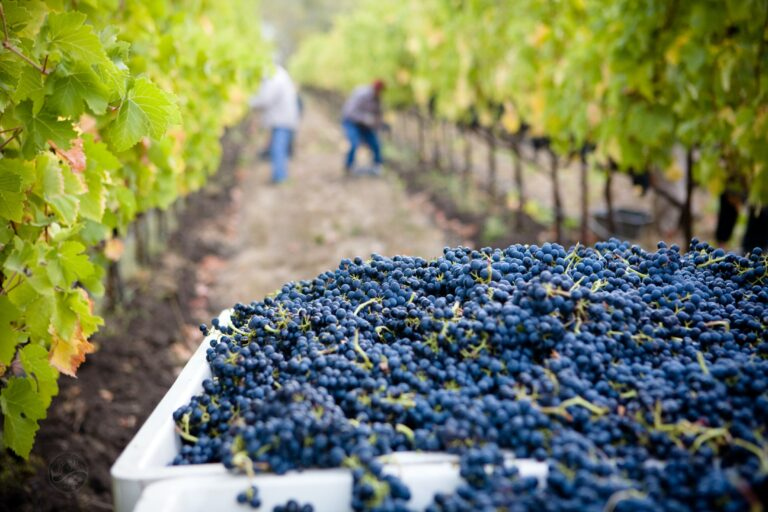 Get ready for grape harvest
