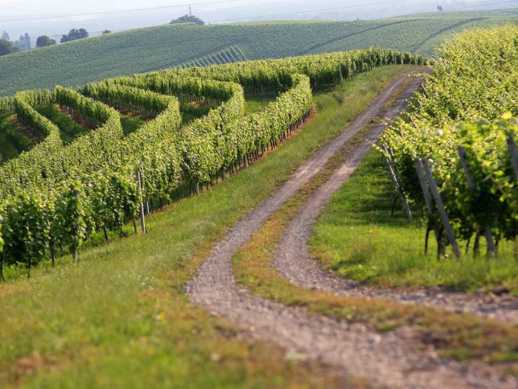 Case study of vineyard management optimization
