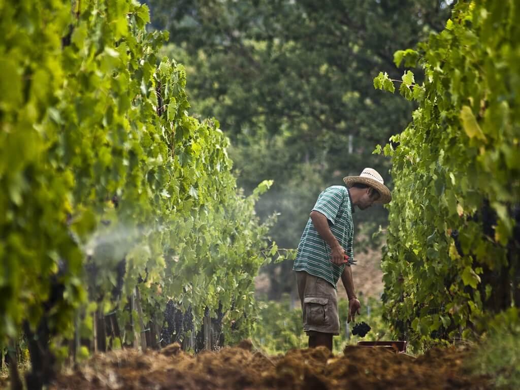 Case study on harvest optimization