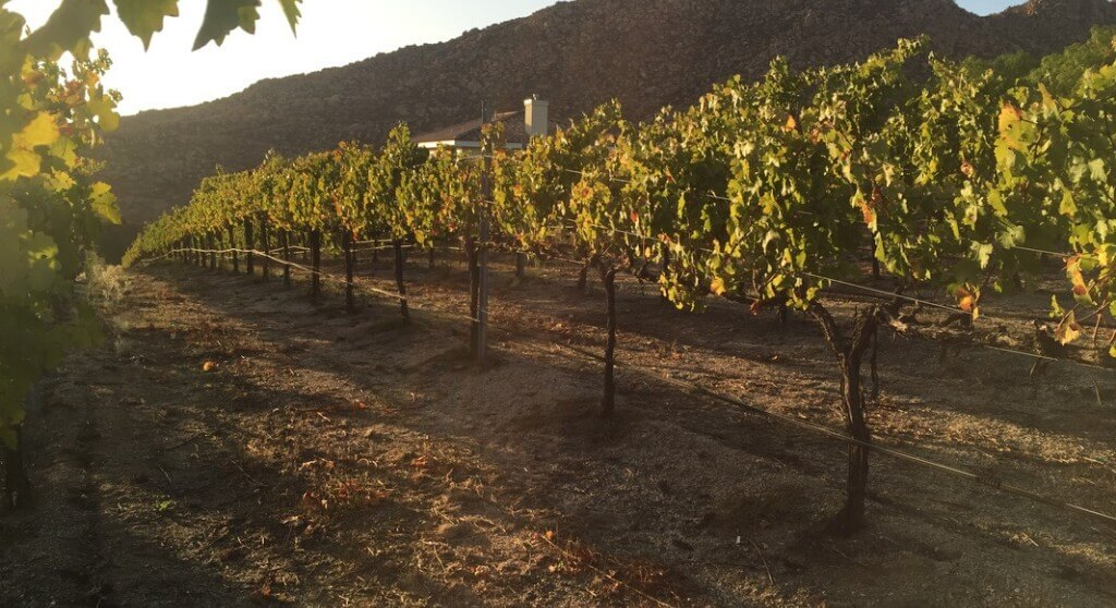 Case study of the precision vineyard irrigation