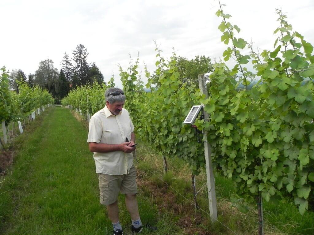 Case study on vineyard decision making