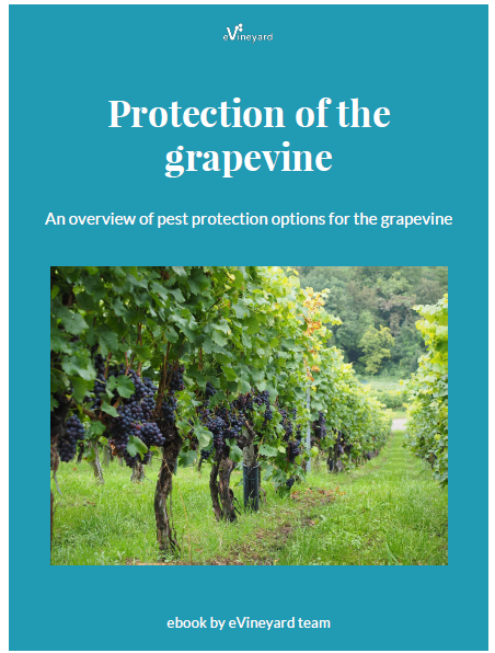 Protection of the grapevines