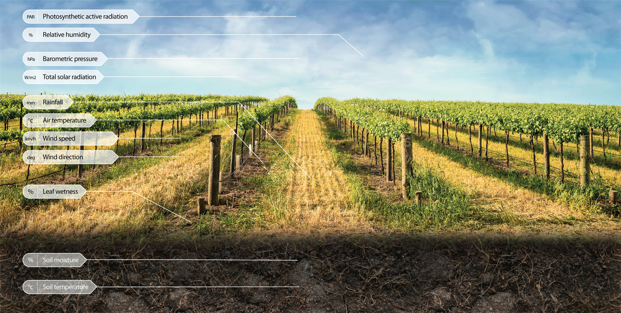 Vineyard data measurements and decision support